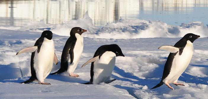 Penguin 4.0 ist da