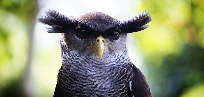Project Owl: Gatekeeper Google vs. Fake-News