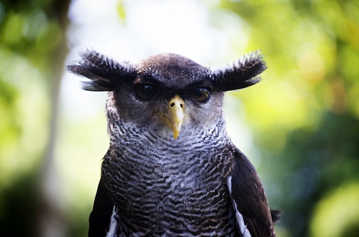 Google Owl hält Ausschau nach Fake-News: Schuhu. Schuhuu!